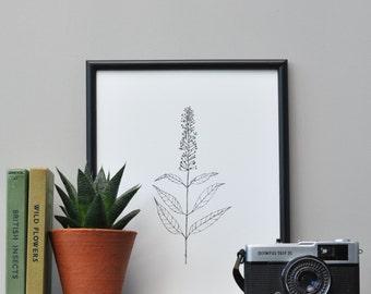 Botanical Screen Print, Botanical Style Art, Floral Art Print, Botanical Floral Art Prints, Screen Print, Origanal Art, Hand Printed