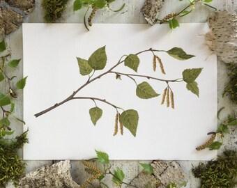 Birch branch - Print A4