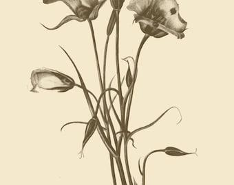Vintage Flower Print- DIY Downloadable Wall Art