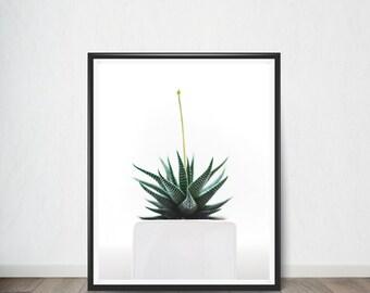 Aloe Plant Poster, Art Print, Digital Art, Digital Art Print, Digital Artworks, Digital Print Art, Digital Art Download