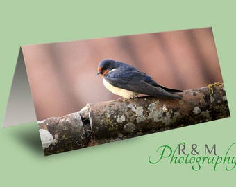 Swallow Greeting Card - bird card - swallow blank card - blank nature card - photo swallow card - UK wildlife - any occasion card