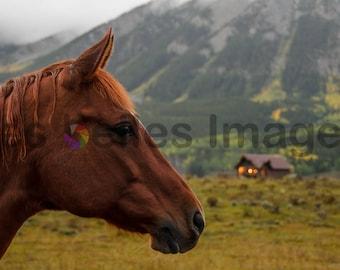 Colorado Horse