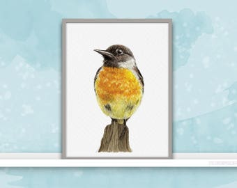European Stonechat {Birds of my heart} Watercolor Illustration & Painting Art Print