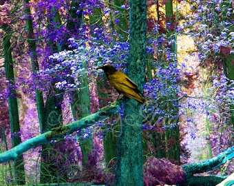 MYSTICAL RAVEN FOREST Surreal Fantasy Photo Twilight Art Print Teal Lavender Purple Black Raven Crow Trees Colorful Forest Choose Size