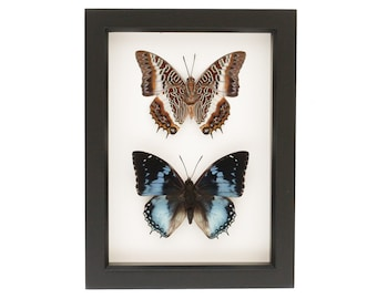 Framed Butterflies Collection African Insect Display