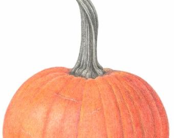 """Pie Pumpkin - unframed botanical art print - fall decor - home decor -  colored pencil art - 11"""" x 14""""  - wall art - orange pumpkin drawing"""