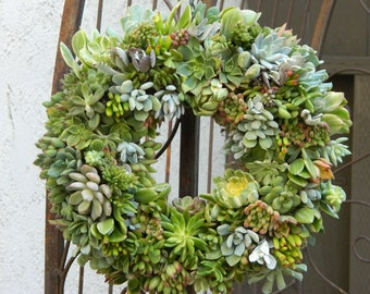 Live Succulent Wreath - Square or Round Succulent Wreath -  Succulent Wreath Housewarming Gift
