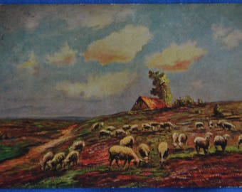 Art Field of White Sheep Farmhouse 1908 Postcard