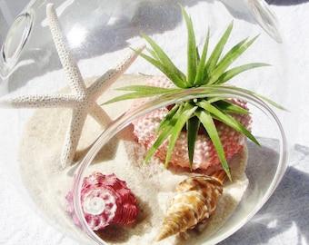 Beach Terrarium Kit ~ Small Air Plant Terrarium Kit ~ Coastal Living Beach Decor ~ Beachside ~ Starfish ~ Pink Sea Urchin ~ Beach Gift idea