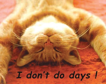 Don't Do Days Ginger Cat Fridge Magnet 7cm by 4.5cm,