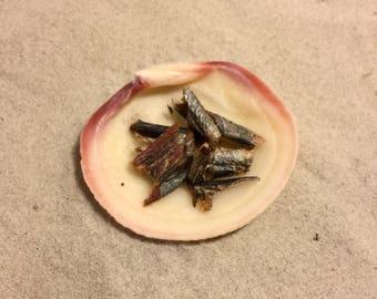Wild Herring ~ Hermit Crab Food