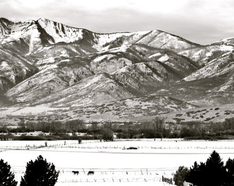 Nature Photography - Peaceful Scene in Park City, Utah - Travel, Winter, Landscape, Snow, Resort, Black & White, Horse, Fine Art Photography