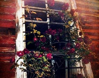 Misty Rose Window