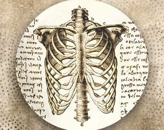 rib cage - Da Vinci plate