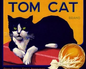 Orosi Tom Cat Orange Citrus Fruit Crate Box Label Art Print