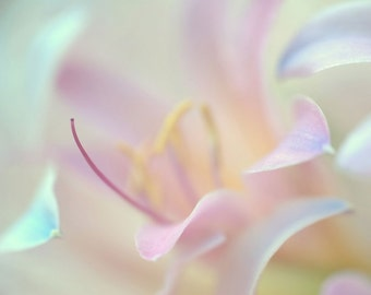 Lily Flower Digital Download Abstract Photography Nature Home Decor Print Web Social Media