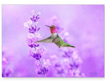 Anna's Hummingbird, Field of Lavender, Photo Greeting Card, Photo Note Card, All Occasion Card, Handmade Card, 5x7 Blank Card, Fine Art