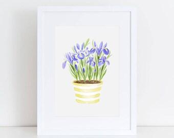 Purple Irises Fine Art Watercolor Print in Yellow Striped Planter