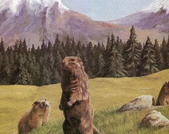 "Alpine Marmot ""Buy one, choose another free""   marmot,  wildlife, animal prints, bird prints, wildlife prints, animals, birds"