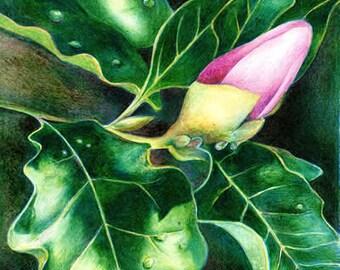 Blossom - Magnolia
