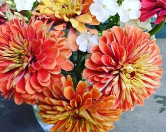 Benary's Salmon Rose Zinnia, Zinnia Seeds for Cut Flower Gardens, Container Gardening, Heirloom Flower Seeds, Butterfly Garden Zinnias