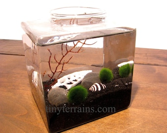 Mother's Day Gift Marimo Terrarium: Japanese Marimo Moss Ball Terrarium Kit, 23 Colors, Gift Wrap, Card, Fast Shipping, Personalized Gift