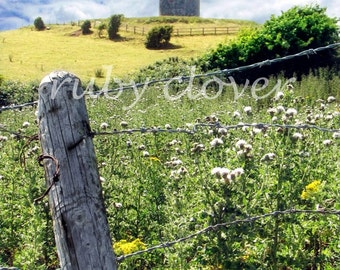 Windmill Hill in Portaferry, Northern IRELAND, Scenic View, IRISH CASTLE Photo, County Down, Yellow Flowers, Green and Blue,Tullyboard Stump