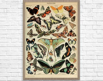 Butterfly Art, Adolphe Millot Butterfly, Butterfly Poster, Butterfly Print