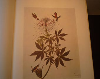 Rufous Hummingbird - Audubon Color Print from original 1850s painting - beautiful birds - gift for birders - nature lovers - western bird