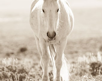 "Wild Horse Photography, Horse Photographs, Sepia Tone, Mustangs. ""Party Girl"""