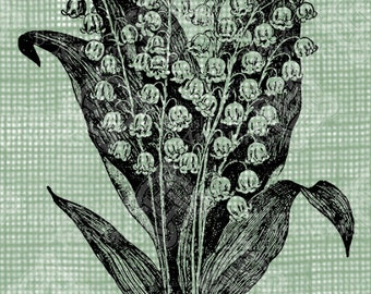 Digital Download Lily of the Valley image Antique Illustration  c. 1900, digi stamp, digis, digital stamp, Elegant, and beautiful