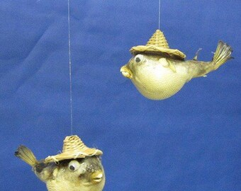 Preserved Parrot Fish with Straw Hat & Hanging String  (EA)