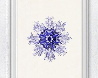 Minimalist Jellyfish from the bottom   , Wall decor poster - sea life print-Marine  sea life illustration A4 print SAS120
