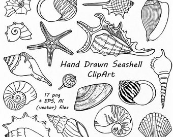 Hand Drawn Seashell Clipart, Shell clip art, Digital Stamps,Summer Beach, PNG, EPS, AI, Vector clipart, For Personal and Commercial Use
