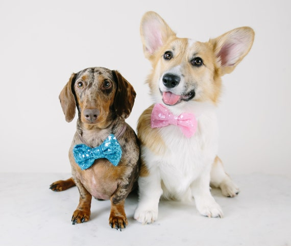 Neck Bowtie for Dog|| Dog Bow Headband || Dog Neck Tie || Pet Bow Tie || Dog Clothes