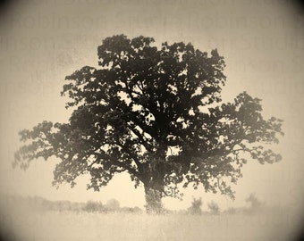 Oak. Tree of Life. Black and White. Original Digital Art Photograph. Wall Art. Wall Decor. Giclee Print. REFUGE by Mikel Robinson