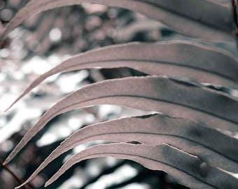 Foliage, point of view with depth of field, nature, fine art photography