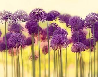 Purple Allium Flowers, Allium Wall Art, Allium Canvas Art, Purple Flower Canvas Art, Purple Allium Photography, Purple Flowers Photography
