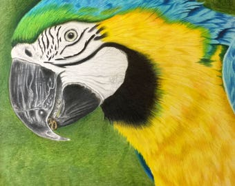 The Macaw of Mystery - Original Colored Pencil Art