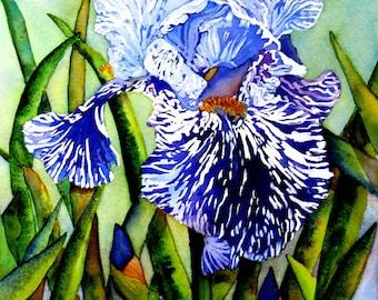 TIGER IRIS - Original Watercolor Painting