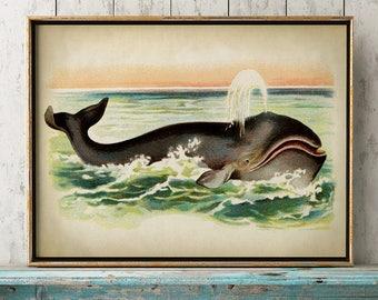 Aged WHALE Poster, Greenland Whale Print, Marine Decor, Nautical Art, Seal Life, Marine Life Print, Beach Home, Coastal theme, unframed  art
