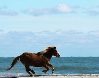 Go pony, go!