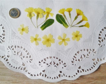 Dried flowers, Pressed primrose flower, Dried primula flower , Real pressed flowers, Craft Supply, natural yellow flowers for crafts