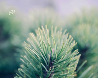 Artistic photograph of a branch of fir, needle, tender green, spring, gipsy, bohemian, nature, bokeh, rustic, country