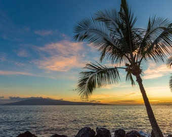 Palm Tree Sunset Vertical on Beach Surf Decor Print, Ocean, Hawaii, Maui, Oahu, Kauai, Tropical, Hawaiian Island, California, Florida