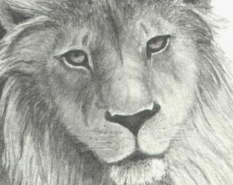 Lion ACEO - Print of Original Drawing