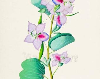 Botanical Print, Botanical Art Print, Bauhinia Flower Art Print, Flower Wall Art, Flower Print, Floral Print, Home Decor, pink, lilac