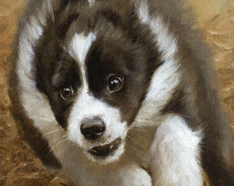 Aceo Dog Print, Border Collie Puppy. From an Original Painting by Award Winning Artist JOHN SILVER. Personally signed. BC011AC