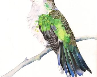 Hummingbird print of watercolour painting HB3415 - A3 size largest print wall art print - bird art - art print - wildlife print