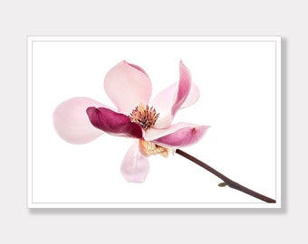 Magnolia, Magnolia Photo, Magnolia Flower Photo Print, Printable, Photo Decor, Modern Photo Art, Instant Digital Download, Photo Download